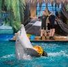 Дельфинарии, океанариумы в Семикаракорске