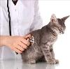 Ветеринарные клиники в Семикаракорске